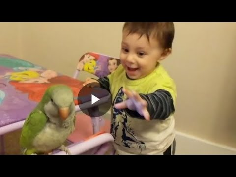 Infant Excited to catch a Parrot- Funny Video- Funny Animals