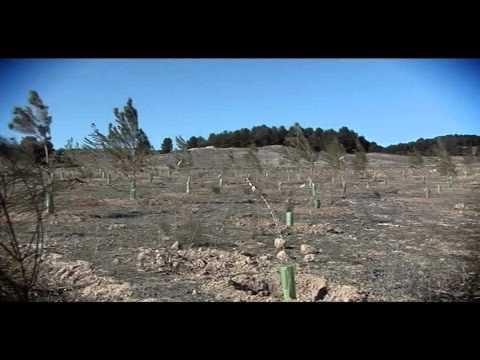 Proyecto Un Scania, Un Árbol
