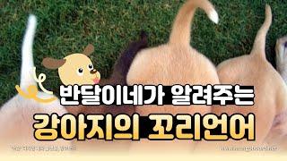 강아지들의 언어, 꼬리 I 반달이네 청소년운영기획단 (…