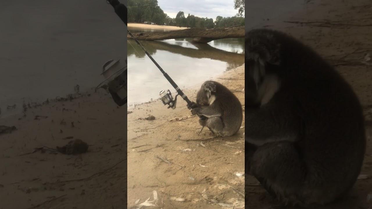 Chytit rybu z Austrálie