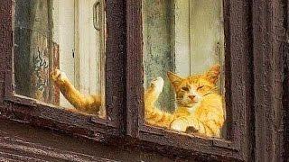 Смешные видео про животных! Приколы с кошками и прочими зверюшками!