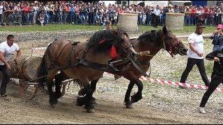Concurs cu cai de tractiune - proba de dublu - Rasnov, Brasov 15 Iulie 2018
