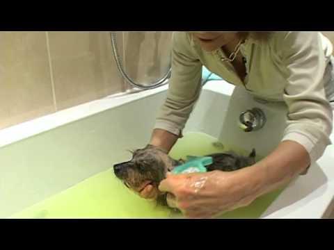 Toiletteur - Bain Et Soins