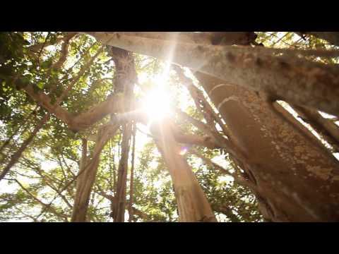 Visit Sarasota County: Happy Song