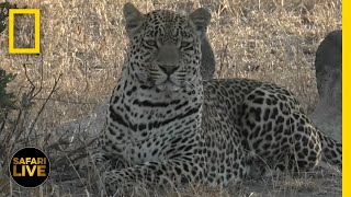 Safari Live - Day 380   National Geographic