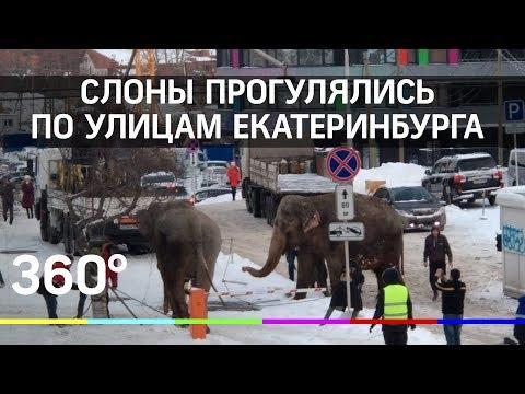 Слоны на улицах Екатеринбурга. Шокирующее видео