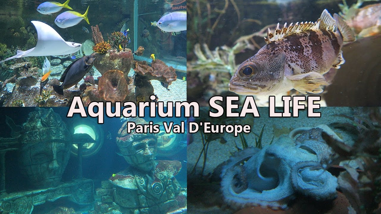 aquarium sea life paris val d 39 europe visite youtube. Black Bedroom Furniture Sets. Home Design Ideas