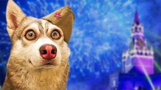 С ДНЁМ ПОБЕДЫ! (Хаски Бублик) Говорящая собака Mister Booble