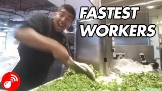 Fastest Workers Ever 2018