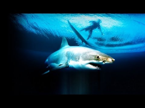 60 Minutes Australia: Great White Hope