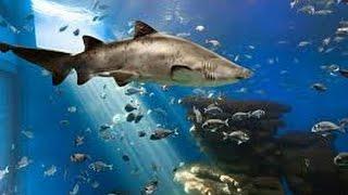 Palma Aquarium Mallorca Shark Tank 4K