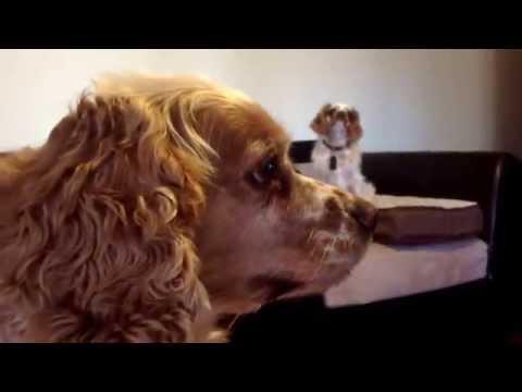 My dogs episode 3 (Luna)