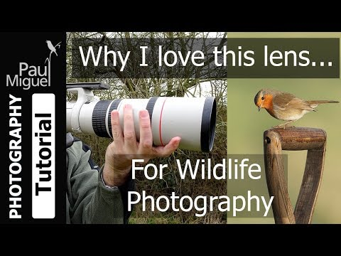 Best Value lens for Wildlife? Canon EF 400mm F/5.6 Review