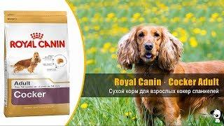 Корм для взрослых собак породы кокер спаниель · Royal Canin Cocker Adult