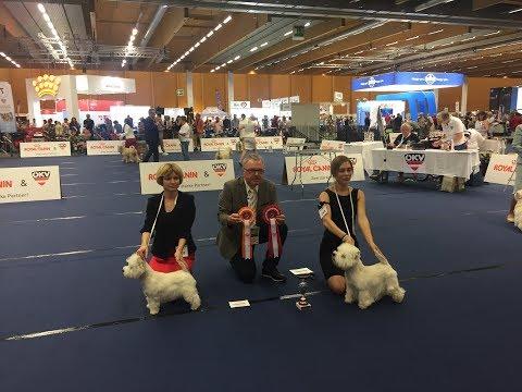 BOB - West Highland White Terrier Competition - Austria Eds 2019