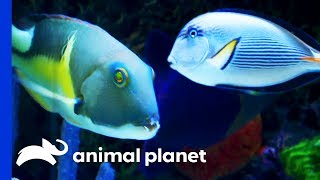 This Huge Tank is Home To Some Amazing Rare Fish | Tanked