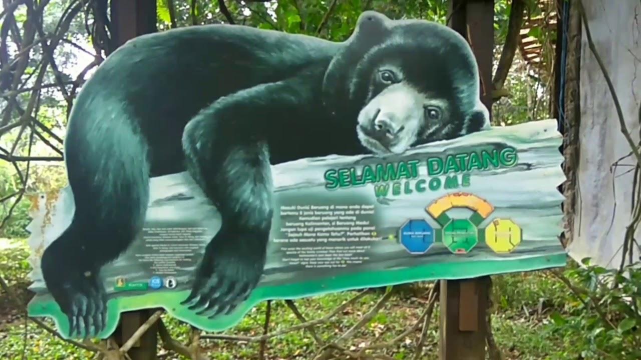 Wisata Beruang Madu Balikpapan Youtube