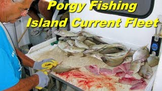 Porgy Fishing with the Island Current Fleet in New York