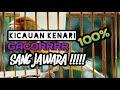 Masteran Kenari Jawara Auto Jernih Dijamin Gacor Dorrr  Mp3 - Mp4 Download