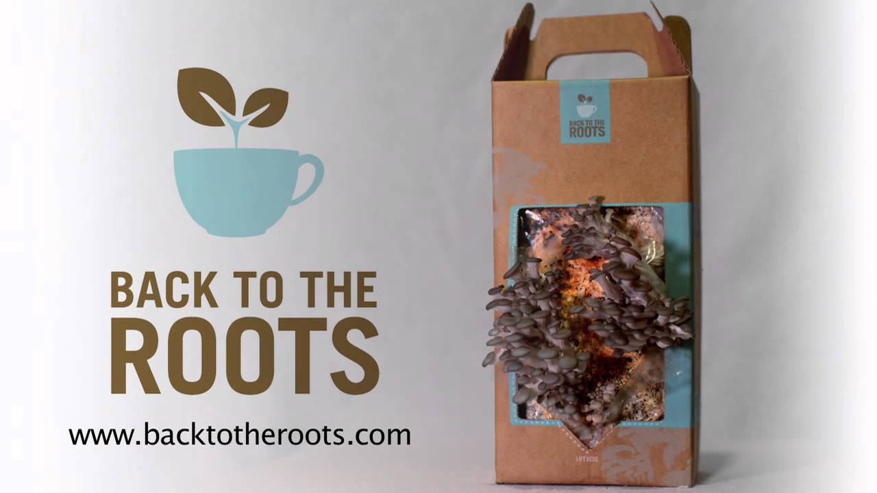 Back to the Roots | Foodiacs
