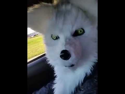Fox Head Mask