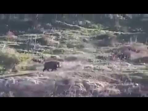 Hogzilla! Feral Hog Hunting Gone Wrong!