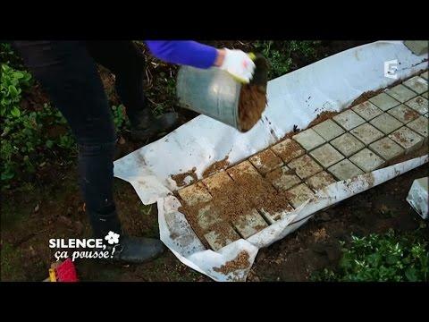 Construire une allée au sec dans son jardin - Silence, ça pousse !