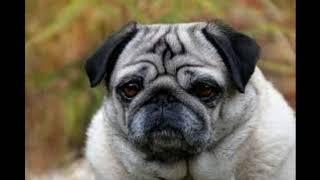 20 Best Dog Breeds.