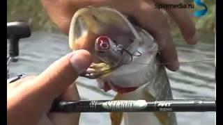 Рыбалка весной на щуку , поверхностные приманки,  Попперы