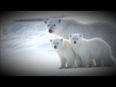 Alaskan town's polar bear problem leads to tourism boom