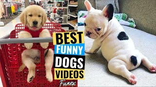 Try Not To Laugh   At This Super 🐶 Funny Dogs Videos 2020 #6