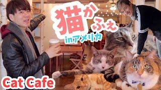 猫カフェ #癒し #ゲイカップル ☆English Subs☆ 今回はアメリカにある猫...