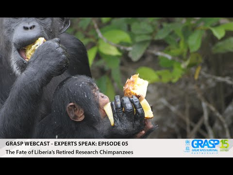 Webcast EP 5 - The Fate of Liberia's Retired Research Chimpanzees