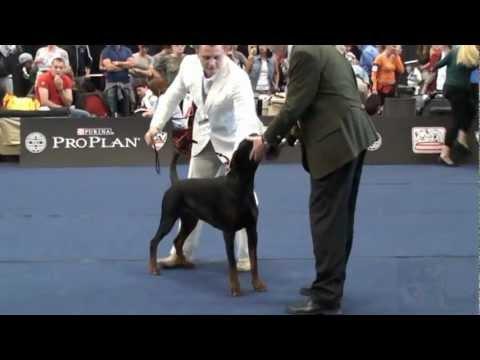 World Dog Show 2012 Salzburg Dobermann poster