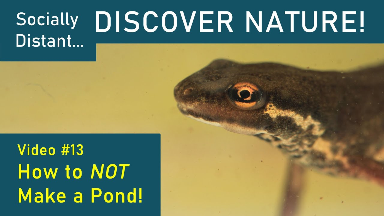 Socially Distant Discover Nature #13 - How to NOT make a Pond!
