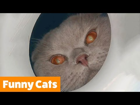 Silly Cat Bloopers | Funny Pet Videos