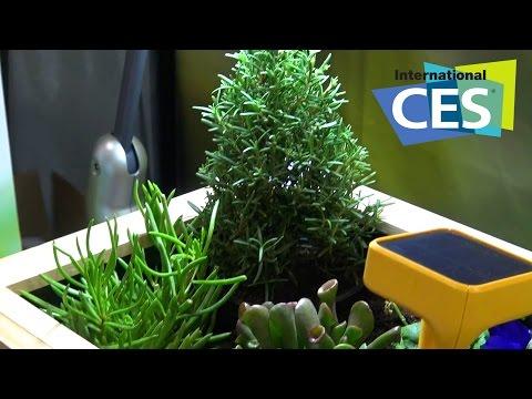 Sensori smart per un giardino sano e rigoglioso - Tom's Hardware