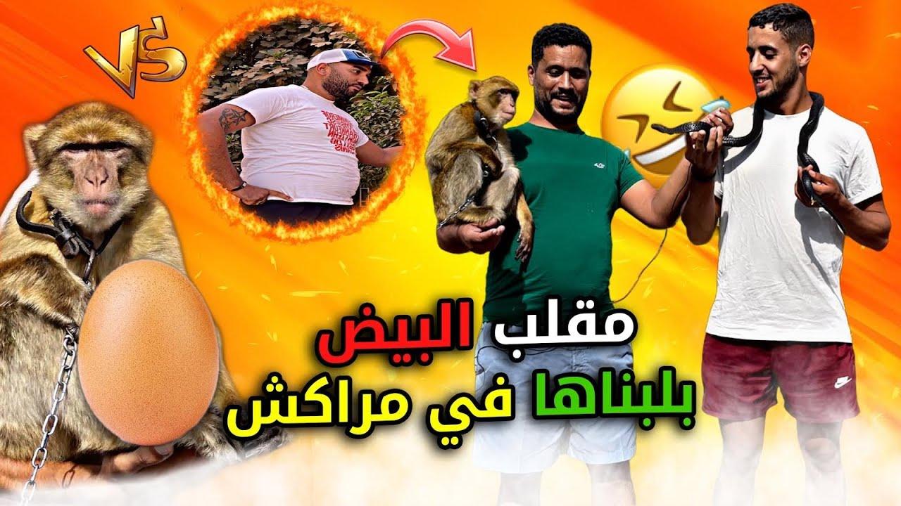 Download أحسن مقلب 😂البيض 🥚في شوارع المغرب 🇲🇦 (مراكش)