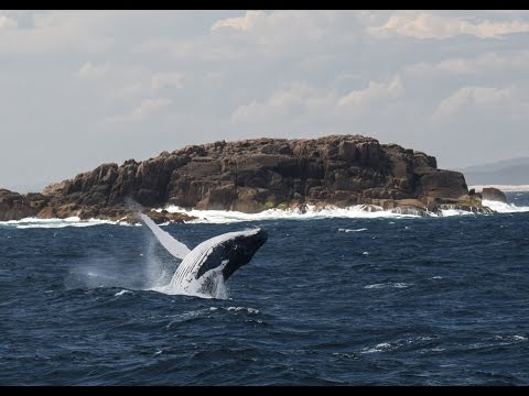 Whale watching off Port Stephens, NSW, Australia