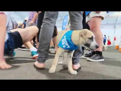 Big Adopt Out - Australia's Biggest Pet Rescue Day Success!