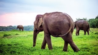 Discover Sri Lanka | Thomson Holidays