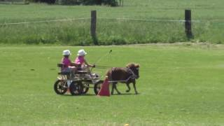 Two kids ride pony chariot