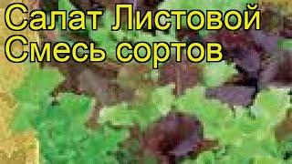 Салат листовой Смесь сортов. Краткий обзор, описание характеристик, где купить семена Smes' sortov