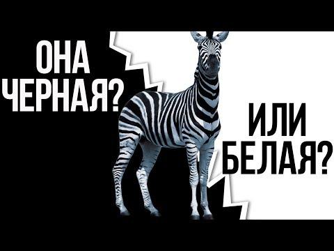 ТЕСТ НА РАСИЗМ - ПРОВЕРЬ СЕБЯ!