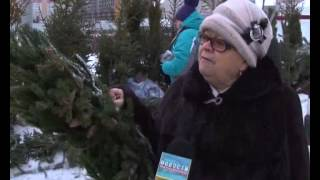 видео Как правильно выбрать и установить живую елку к Новому году