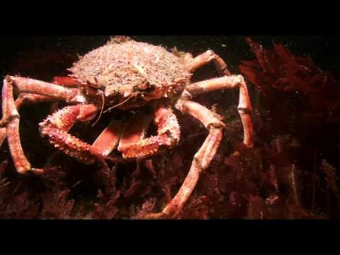 Crabs At Martin's Haven
