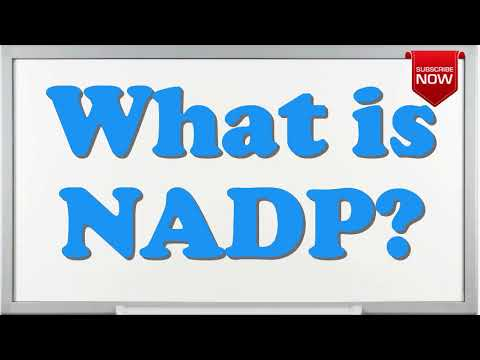 What is the full form of NADP?