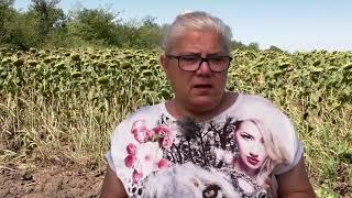 МИКОАПЛАЙ® ЕНДОМАКС - ПОЛЗАТА ОТ МИКОРИЗНИТЕ ГЪБИ