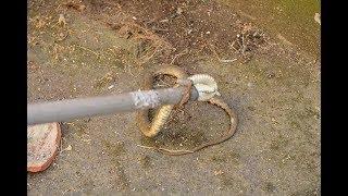 Balkondaki saksılar arasındaki yılanı itfaiye yakaladı