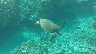 Kona Hawaii Underwater Adventure Short
